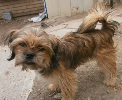 Adopted Emmy Cairn Terriershih Tzu Mix F Age 8 Mo Save